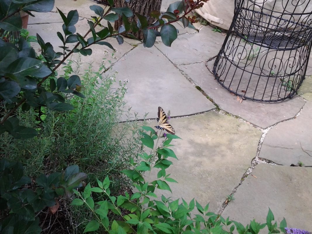what to put between flagstone joints polymeric sand or stone dust