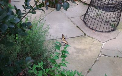 flagstone cost, installed